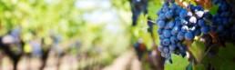cofiprof paolo parola torino notizie OCM Vino Piemonte 2018-2019 - Contributo a fondo perduto per investimenti nel settore vitivinicolo